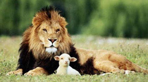 """León reposando junto a un cordero en una pradera. Representa la paz que traerá consigo la venida del Reino de Dios, según anuncia el profeta Isaías: """"El león pacerá con el cordero"""""""