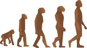 Dibujo que representa la teoría de la evolución