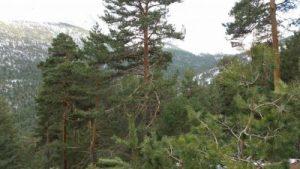 Parque natural de la Sierra de Guadarrama