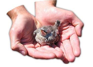 Resignación y resiliencia. Fotografía de un pájaro sobre las palmas abiertas de un hombre