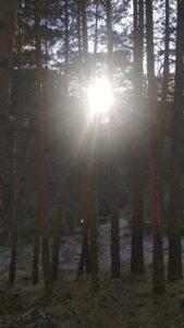 Nueva evangelización. Fotografía del sol dejándose ver entre pinos